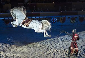 Medieval Times Dinner Theatre Long Reins - Horse at Liberty